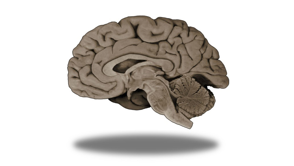 Neuroscience Online Courses - 20 Courses from 15 Universities ...
